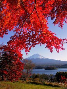 Fuji and Lake Kawaguchi in autumn, (Japan) by Masanori Konagaya Monte Fuji, Sea Of Japan, Japan Japan, Beautiful Places, Beautiful Pictures, Autumn Leaves, Autumn Fall, Japan Travel, Beautiful Landscapes