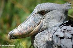 Animales muy raros, pero exoticos... - Taringa!