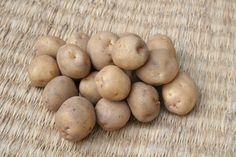 「下栗芋【信州の伝統野菜】」 「天空の里」と呼ばれる山間の急傾斜地、下栗地区で江戸時代から作られている欧州系品種です。 大きさは小さく、7cm以上のものは稀です。肉質は非常に良く締まっていて食味が良く、加熱しても煮崩れしません。 エゴマ味噌をぬった田楽芋や煮物などとして食されています。