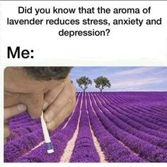 Lavendel also hmmm ? Stupid Funny, Funny Cute, Really Funny, Hilarious, Funny Relatable Memes, Funny Posts, Funny Images, Funny Pictures, Dankest Memes