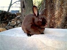 Our Homestead Life: Meat Rabbits fur rabbits satins.