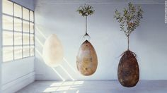The biodegradable burial pod that turns your body into a tree-Capsula Mundi is an egg-shaped pod through which a buried corpse or ashes can provide nutrients to a tree planted above it.