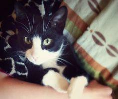 Take a breather and catch up with my blog💥 Kitten hides behind its paws – Sweet as Honey  https://felixbcats.wordpress.com/2015/07/12/kitten-hides-behind-its-paws-sweet-as-honey/?utm_campaign=crowdfire&utm_content=crowdfire&utm_medium=social&utm_source=pinterest #cat #cats #meow #chat #catslover #catsoftheday #catsgram #gato #ilovemypet #gatta #catstagram #catsofsoutheastalaska #ilovemycat #chaton #katzenliebe #catsoftheworld #meowmeow #cats_of_instagram #ilovecats #catsrule #catsofinsta…