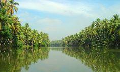 Kerala Jungle, India.