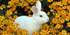 Cruelty-Free Product Shopping   Humane Home   Living   PETA
