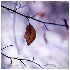 cool crisp fall <3