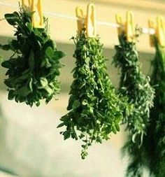Tips on how to harvest and preserve Herbs
