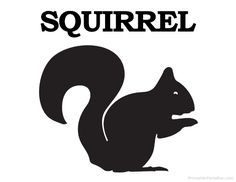 Printable Squirrel Silhouette - Print Free Squirrel Silhouette