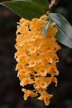 Hanging orchids | Flickr - Photo Sharing!