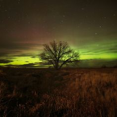 Northern Lights - Near Billings Montana