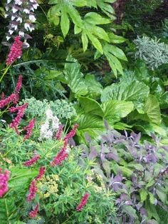 Lots of texture created by Fatsia japonica, Bergenia, Salvia officinalis 'Purpurascens', Acanthus mollis and Persicaria.