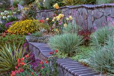 Summer-Dry Plants and Gardens