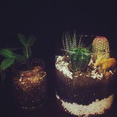 Mis hermosos terrarios <3