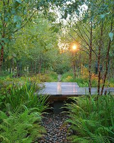 Beautiful, natural, functional rain garden landscape design. (Residence located just outside Shreveport, Louisiana)   Via Jeffrey Carbo Landscape Architects