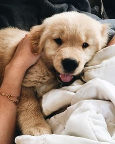 Golden Retriever Puppies Obsessed With Goldens - Super Cute Puppies, Cute Baby Dogs, Cute Little Puppies, Cute Dogs And Puppies, Cute Little Animals, Cute Funny Animals, Doggies, Retriever Puppy, Dogs Golden Retriever