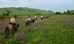 Horse Pack Trip in Gorkhi Terelj National Park of Mongolia with Stone Horse Expeditions & Travel. This is a cultural landscape used by nomadic livestock herders for summer grazing and hay making. This wide open valley in forest steppe is blooming with wildflowers. #travel, #Vacation, #vacation-ideas, #outdoor, #photography, #horses, #Mongolia, #trekking, #Asia, #adventure-travel, #eco-travelwww.stonehorsemongolia.com/$2750