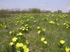 Pohľad na PR Sedliská Plants, Garden, Garten, Planters, Gardening, Outdoor, Home Landscaping, Plant, Tuin