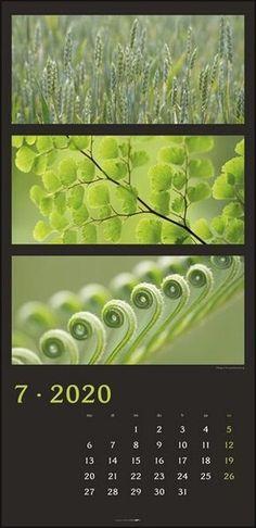 Die Farben der Natur Vertical Kalender 2020 - KV & H