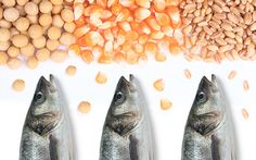 Shift to Plant-Based Feed Affects Nutritional Value of Farmed Fish: new study shows aquaculture industry's move to plant-based feed reduces omega-3 levels.