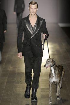 Dog catwalk
