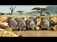 fat funny, laugh, funni, hilari, humor, fast food, if animals were fat, video, thing