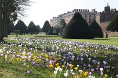 Hampton Court Palace gardens in full bloom. Photograph: thithu