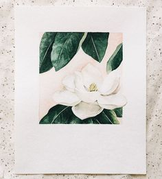 Graphic Design - Graphic Design Ideas  - Magnolia Blossom Floral Study Art Print by Anna Tovar on Scoutmob   Graphic Design Ideas :     – Picture :     – Description  Magnolia Blossom Floral Study Art Print by Anna Tovar on Scoutmob  -Read More –