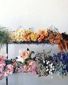 I like my flowers in rainbow order - Site Title Cactus, Rainbow Flowers, Flower Aesthetic, My Flower, Land Scape, Wedding Flowers, Fall Flowers, Fresh Flowers, Pink Flowers