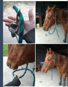 Makeshift halter out of a lead rope Cute Horses, Horse Love, Beautiful Horses, Horse Anatomy, Horse Gear, Horse Tips, Horseback Riding Tips, Horse Braiding, Horse Riding Quotes