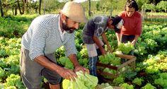 El gobierno eliminó la Secretaría de Agricultura Familiar