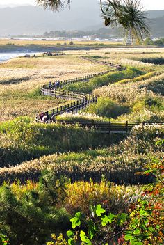 visitheworld:    The path of life, Suncheon Bay, South Korea (by hock how & siew peng).