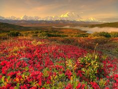 gratis skrivbordsbakgrund - Blomma landskap: http://wallpapic.se/landskap/blomma-landskap/wallpaper-10777