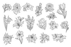 Hand Drawn Monochrome Vector Illustration Original elements to create your own design. Zip contains: PSD / PNG / PDF/ JPEG / AI / I hope you Daffodil Tattoo, Floral Drawing, Tattoo Outline, Hand Drawn Flowers, Flower Doodles, Photoshop Design, Creative Sketches, Pencil Illustration, Petunias