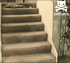 Share this Cat rolls down the stairs while playing Animated GIF with everyone. Gif4Share is best source of Funny GIFs, Cats GIFs, Reactions GIFs to Share on social networks and chat.