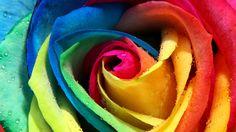 flor colorida super chulaaaa