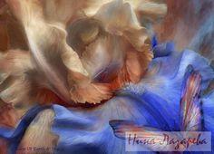 Gallery.ru / Фото #65 - Потрясающие цветы от Кэрола Каваларис - ninatela