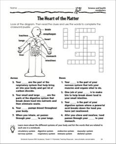 Body systems matching quiz 11 questions total pinterest body the heart of the matter crossword puzzle page science and health vocabulary ccuart Choice Image