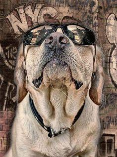 All Dogs, Mans Best Friend, Labrador Retriever, Pup, Beast, Street Art, Animals, Art, Animales