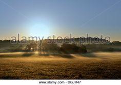 Early morning fog in the Murnauer Moos bog, Murnau, Blaues Land region, Upper Bavaria, Bavaria - Stock Photo