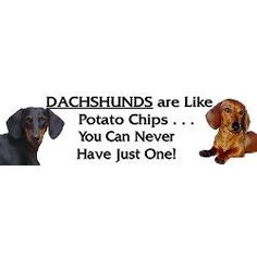 Dachshund Stickers | Car Bumper Stickers, Decals, & More Car Bumper Stickers, Decals, Cute Animals, Weiner Dogs, Dachshunds, Pretty Animals, Tags, Dachshund, Bumper Stickers For Cars