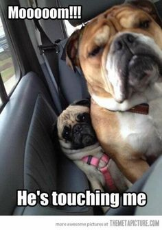Sibling Rivalry between dogs | Funny dogs | www.Just4MyPet.com