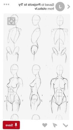 Zenith's media content and analytics Human Body Drawing, Human Anatomy Drawing, Body Reference Drawing, Human Figure Drawing, Figure Sketching, Anatomy Art, Art Reference Poses, Human Anatomy Female, Anatomy Sketches