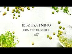 Trin 3 til spirer - Giv dine spirer en god start med iblødsætning af spirefrøene. Komplet spireguide på https://spirefroe.dk/hvordan. Shop på https://spirefroe.dk/#spirer #spiredyrkning #iblødsætning #friskespirer #økologiskespirer #spirevideo