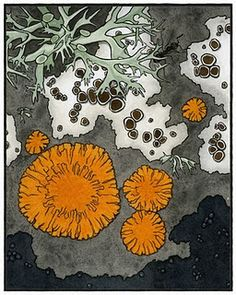 A detail from Prange's illustration of lichens: