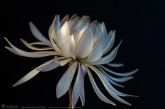 雪月花 -Snow Flower-