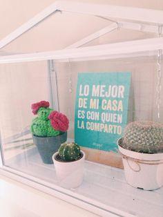 Cactus bemydeco
