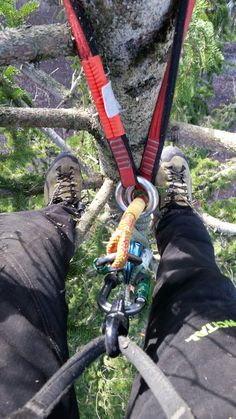 Ecimage Arbor Tree, Climbing Technique, Tree Felling, Deer Camp, Tree Pruning, Climbing Rope, Rando, Tree Care, Search And Rescue