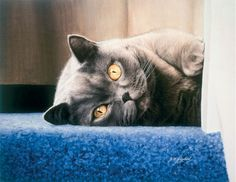 Cyan on the Stair - British Shorthair Blue Cream by Jacqueline Gaylard