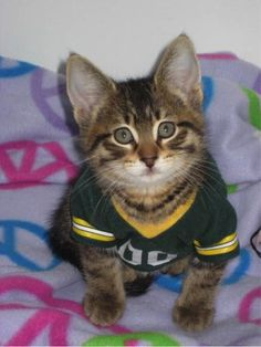 2014 Winner: Cutest #Packers Pet