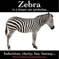A zebra in a dream can represent… More in The Curious Dreamer's Dream Dictionary and at TheCuriousDreamer.com... #dreams #dreammeaning #dreamsymbols Book Meaning, Dictionary Meaning, Dream Dictionary, Weird Dreams, Sweet Dreams, Dream Book, My Dream, What Your Dreams Mean, Dream Symbols